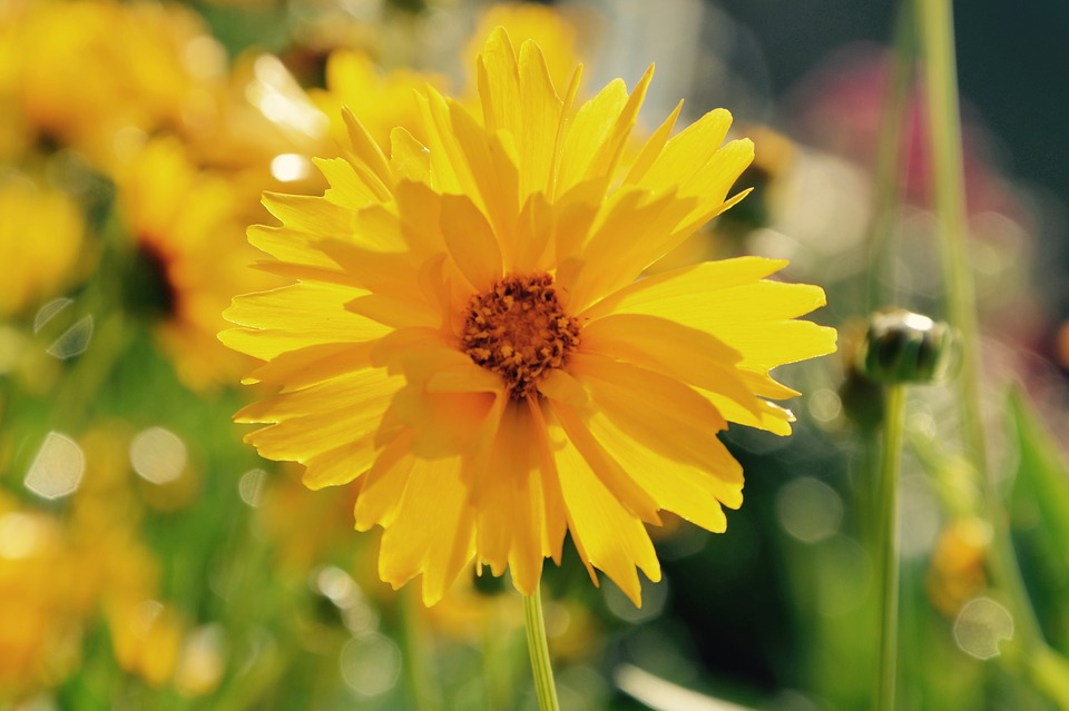Free photo nature yellow flower bright yellow flowers bouquet max flowers yellow flower bright yellow nature bouquet mightylinksfo