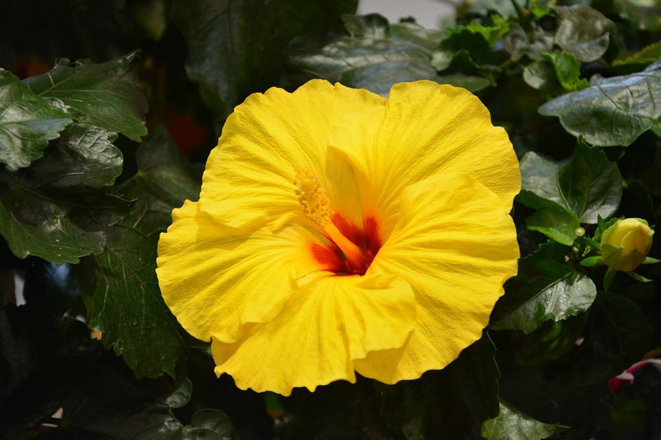 Yellow Flower, Nature, Massif, Yellow Was, Country