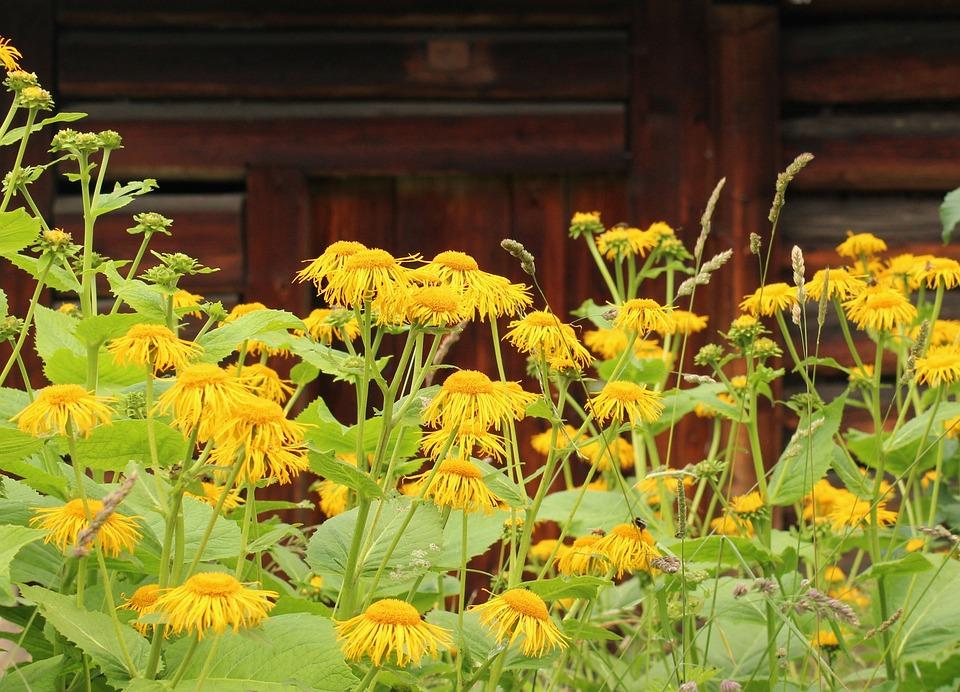 Flowers, Vegetation, Yellow Flowers, Garden, Nature