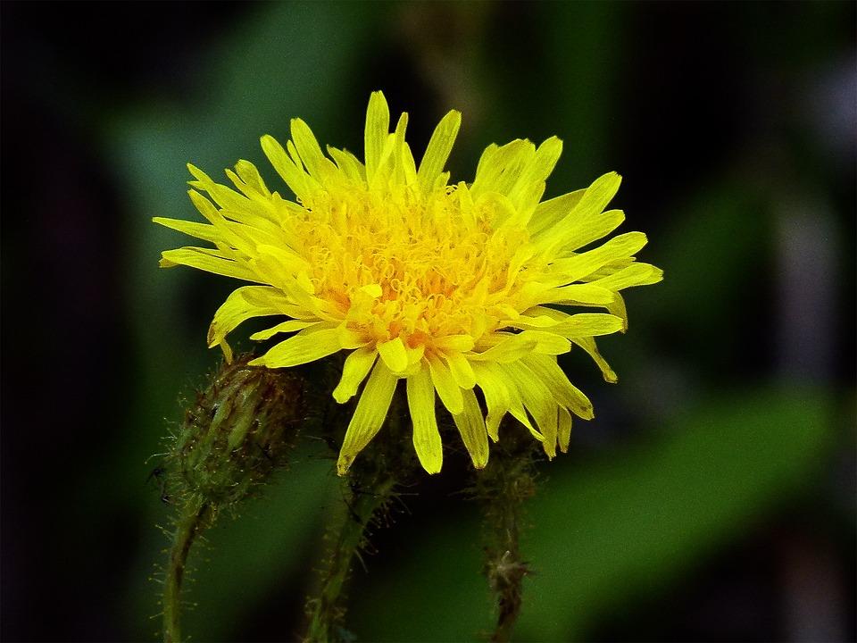 Yellow, Wild Flower, Nature, Summer Flowers, Bloom