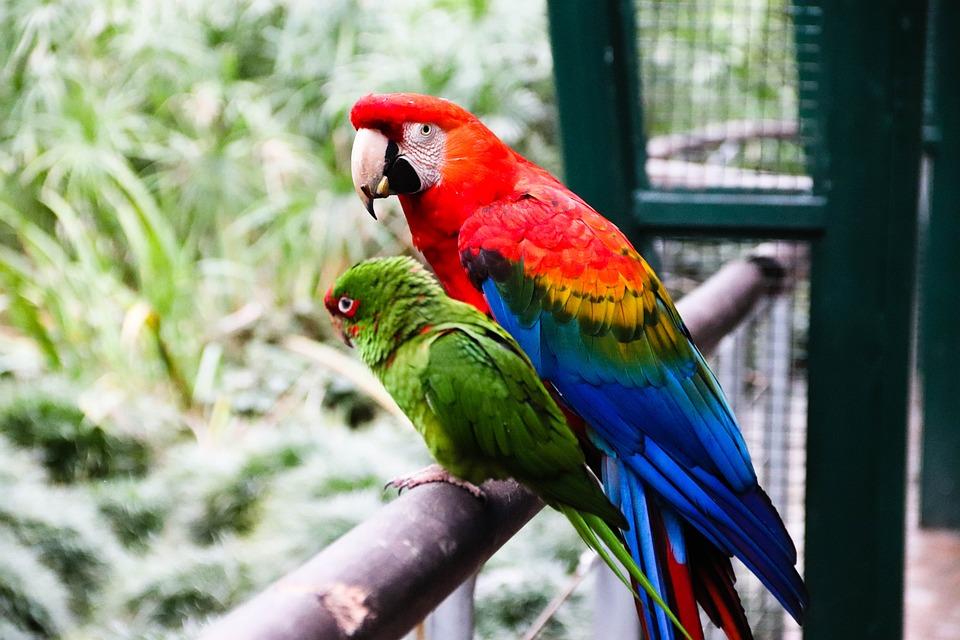 Parrot, Macaw, Ara, Ara Macao, Park, Zoo, Nature, Wild