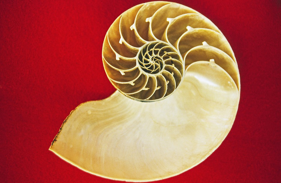Nautilus, Cephalopods, Sea, Holiday, Memory, Housing