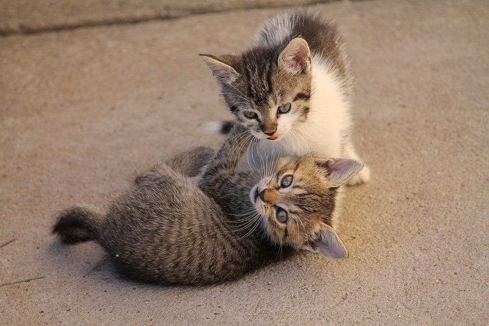 Cat, Pets, Cute, Nearby, állatportré