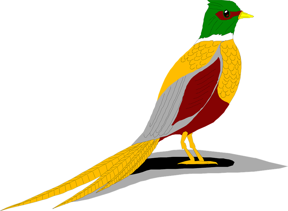 Shadow, Bird, Ring, Wings, Pheasant, Necked, Feathers
