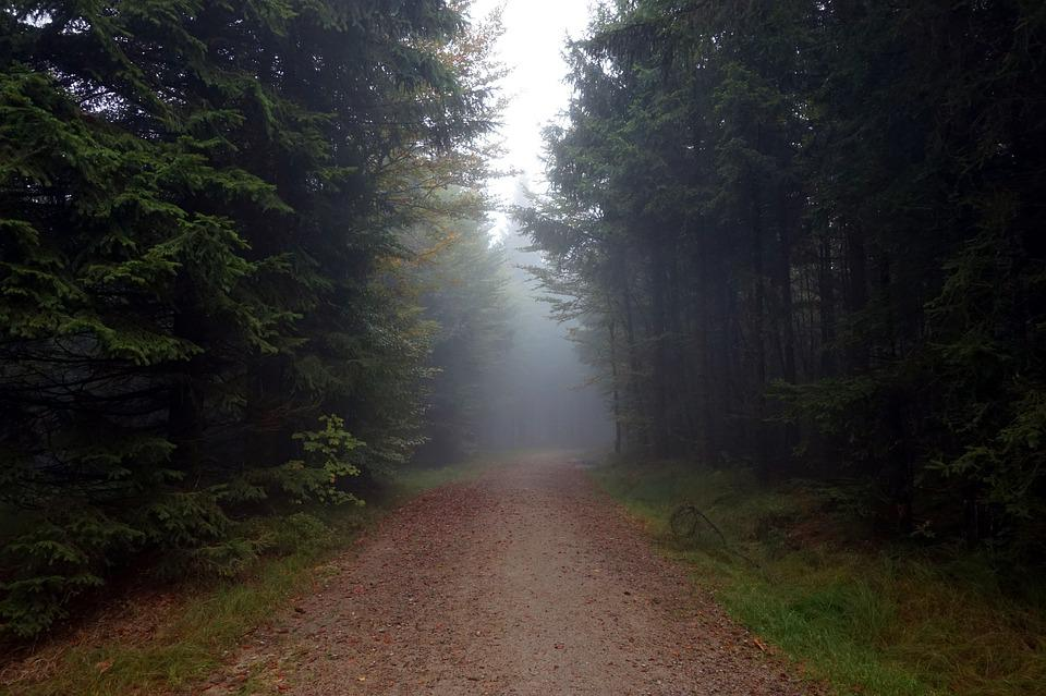 Away, Fog, Forest, Trees, Needle, Nature, Hiking