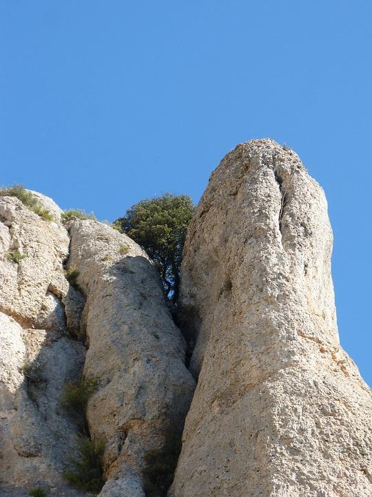 Rocks, Needle Rock, Tree, Survivor, Resistance