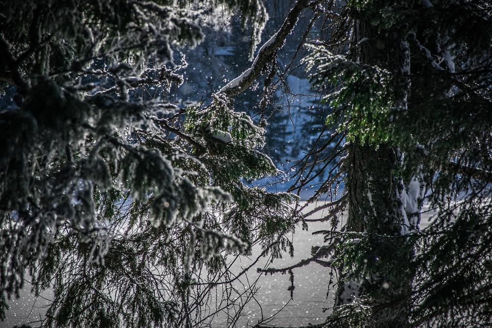 Winter, Trees, Nature, Snow, Frozen, Needles
