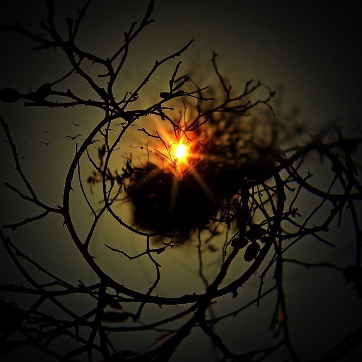 Aesthetic, Tree, About, Sun, Nest, Kahl, Sky, Birds