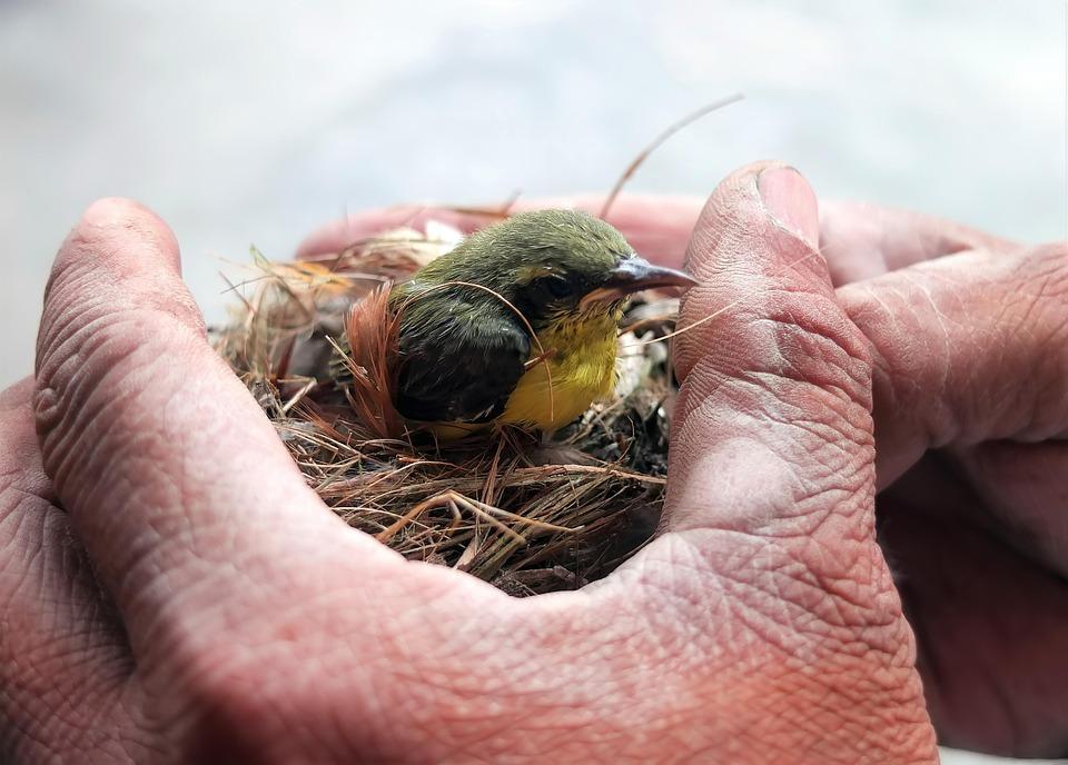 Wild, Wildlife, Bird, Juvenile, Baby, Animal, Nest