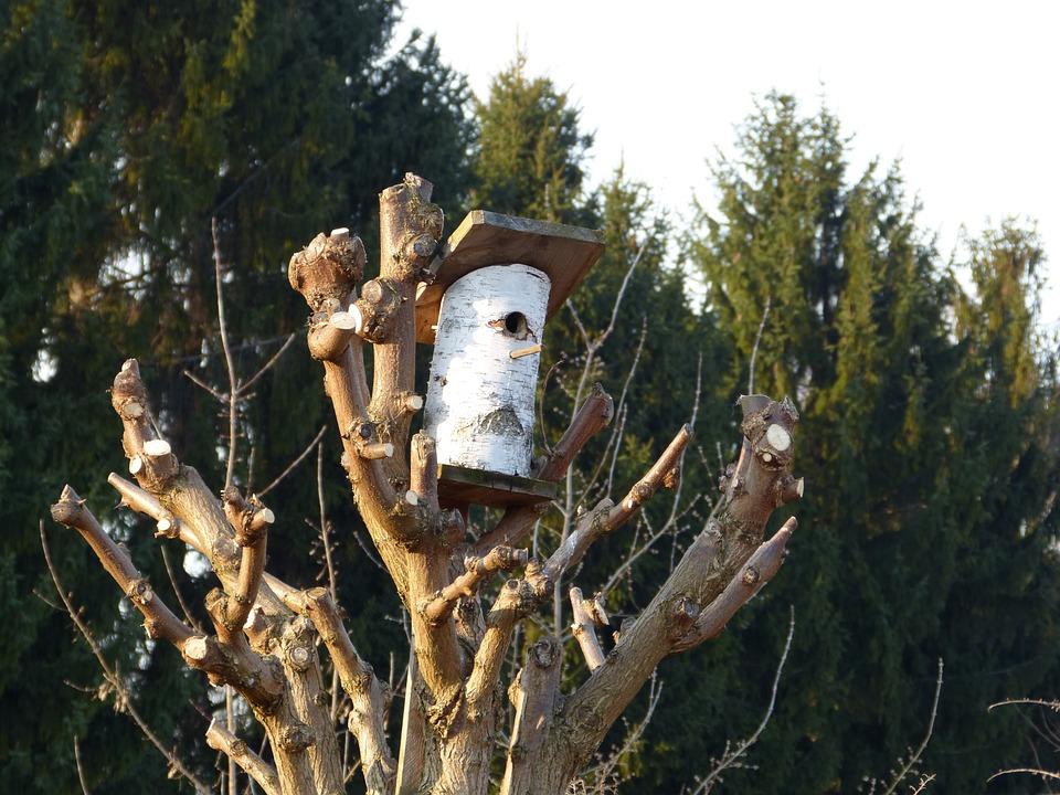Tree, Nest, Aviary, Nesting Box, Nature, Hatchery