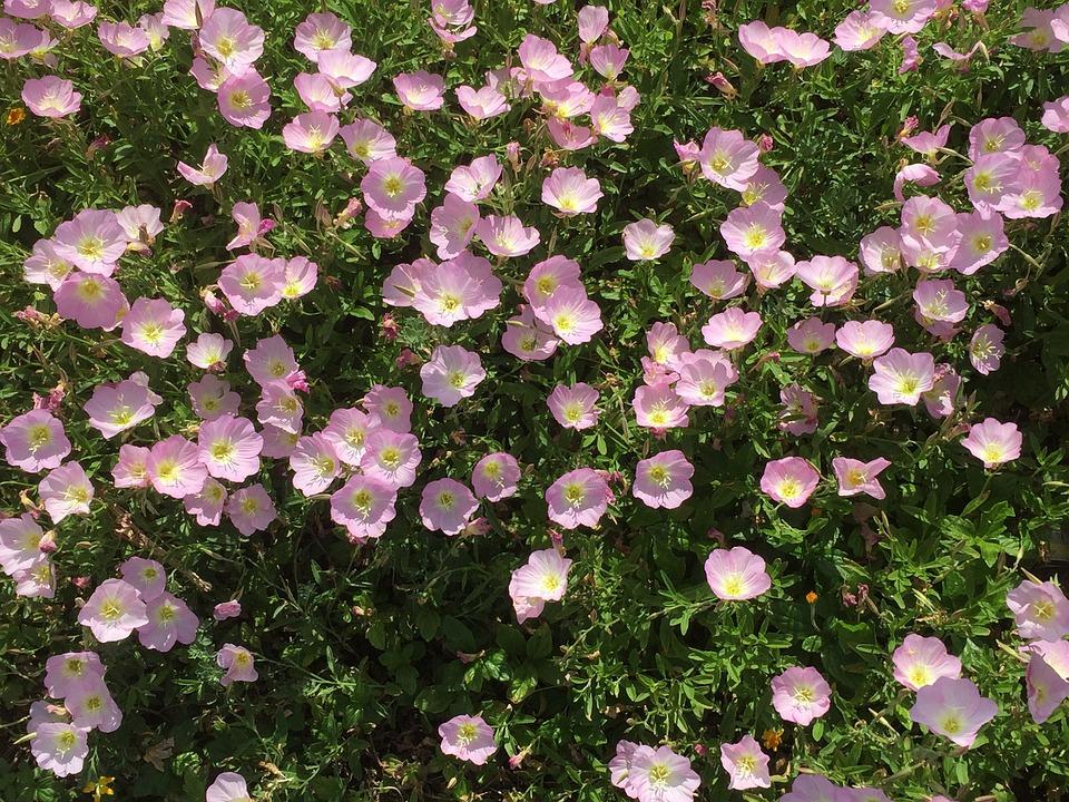 Flowers, Green, Garden, Netanya Beach Israel