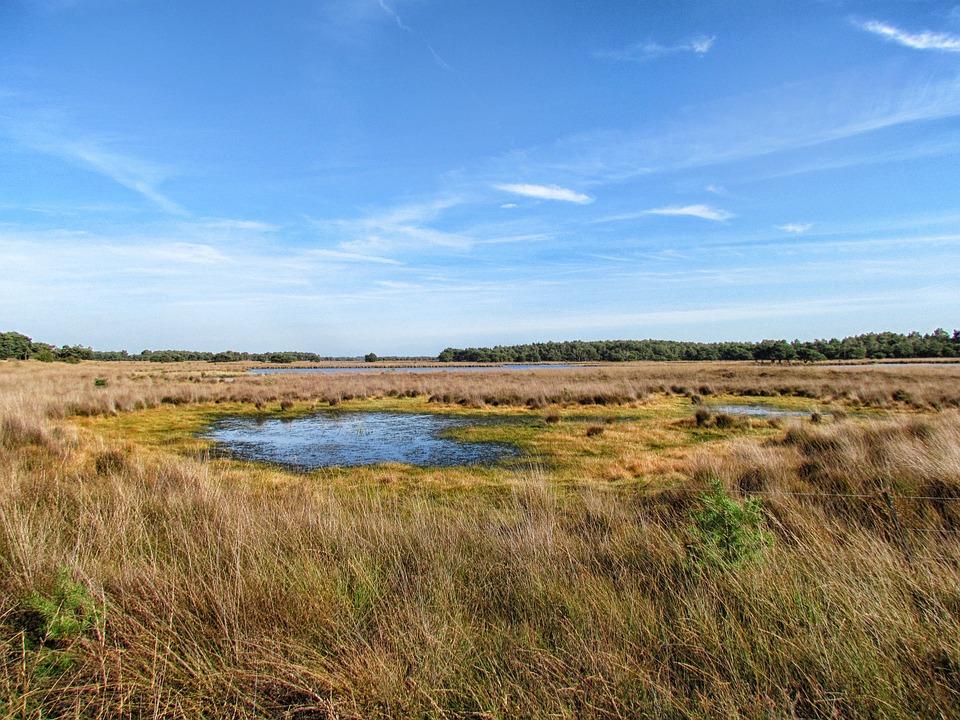 Netherlands, Landscape, Scenic, Plants, Grass, Pond