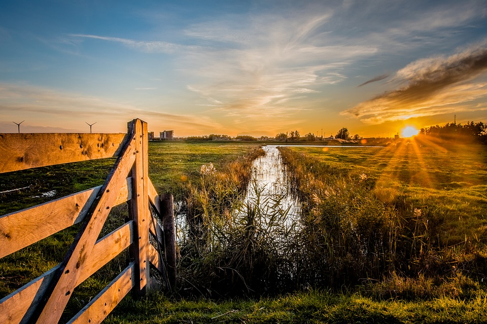 Meadow, Netherlands, The Fence, Nature, River, The Sun