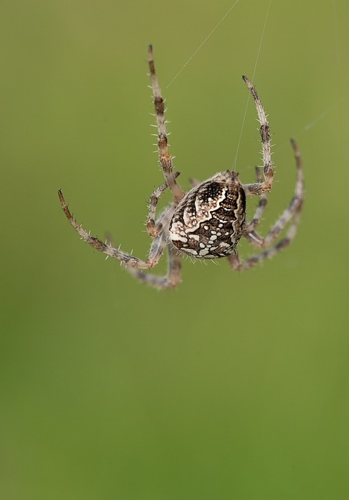 Spider, Cobweb, Network, Nature, Close, Animal