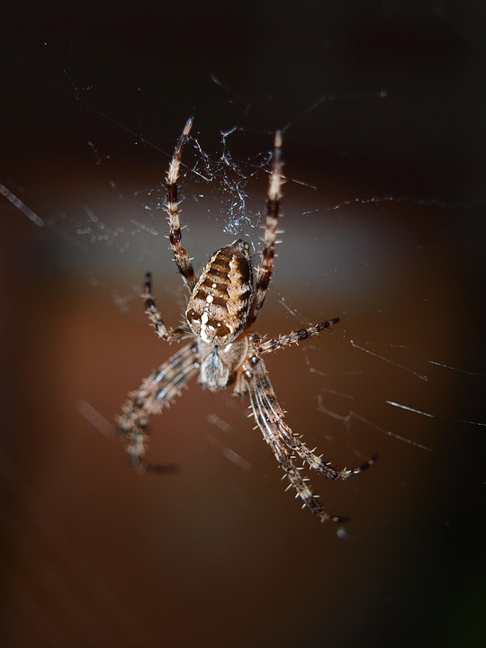 Spider, Close, Network, Insect, Nature, Invertebrates