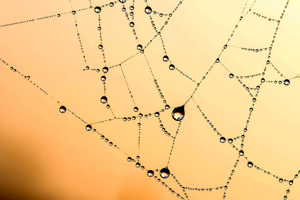 Beaded, Cobweb, Network, Dew, Drip, Raindrop, Dewdrop