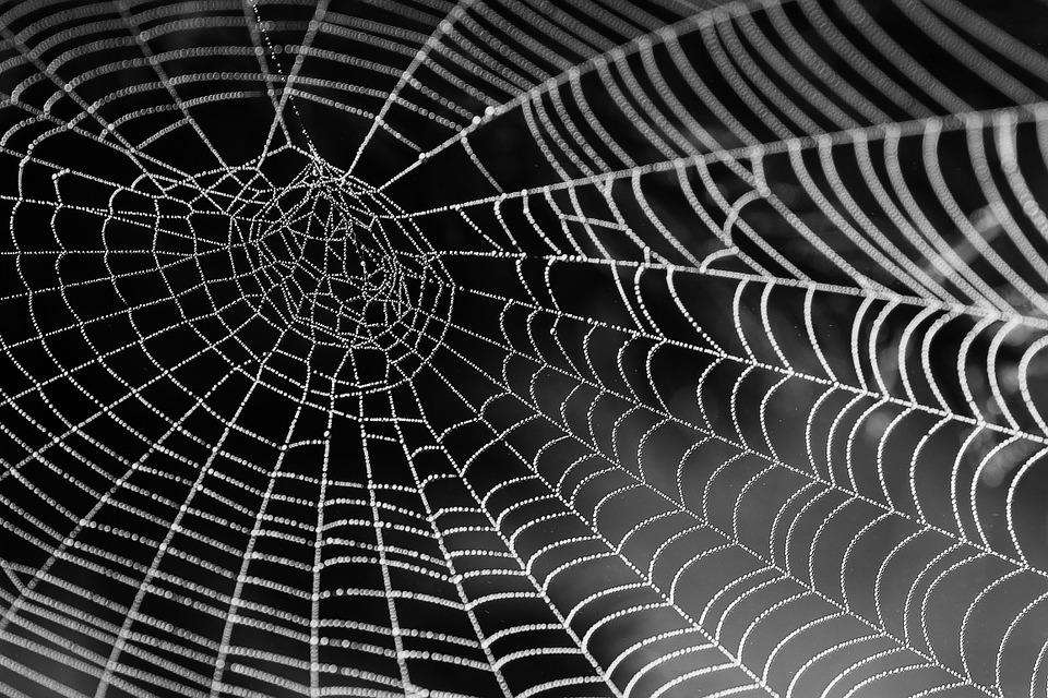 Spider Web With Water Beads, Network, Dewdrop