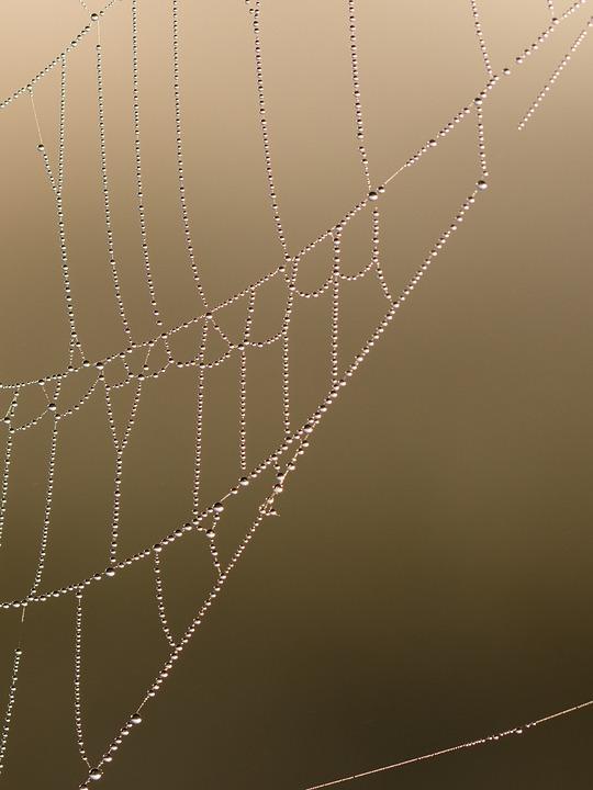 Network, Cobweb, Morgentau, Drip, Dewdrop