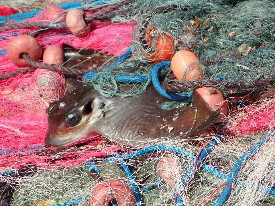 Caught, Network, Fishing Net, Fishing Nets, Fishing