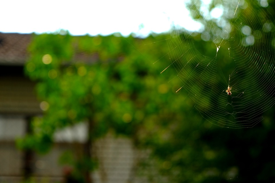 Cobweb, Spider, Nature, Insect, Close, Network, Macro