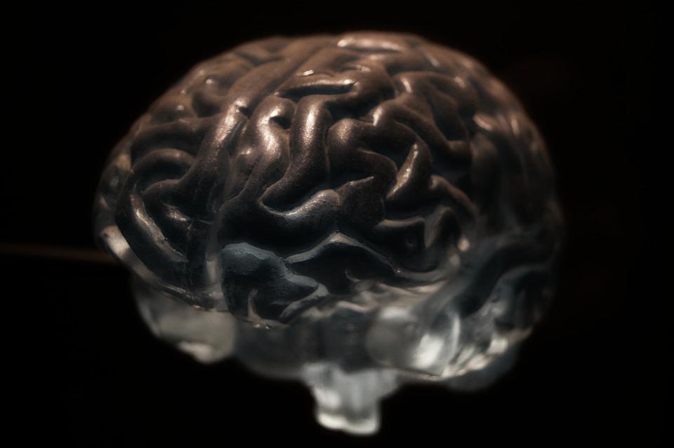 Brain, Anatomy, Neurons, Nervous System