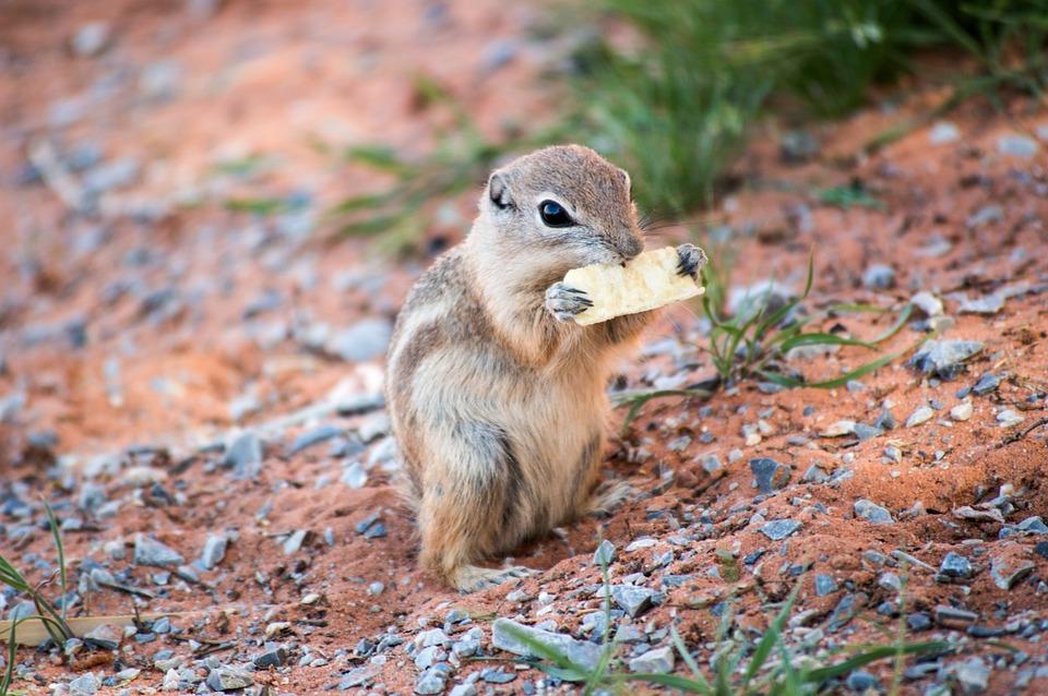 Desert, Animal, Wildlife, Outdoors, Nevada, Wild