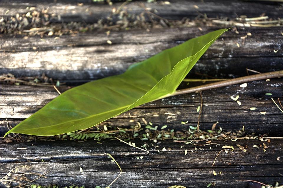 Green, Leaf, New Growth, Garden