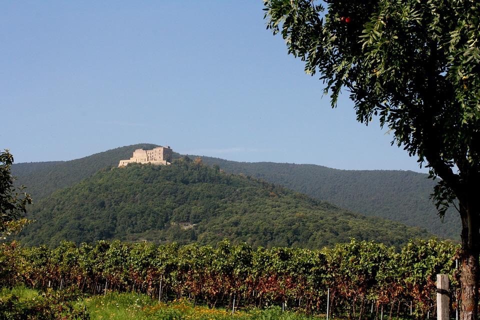 Hambach Castle, Palatinate, Wine, Vintage, New Wine