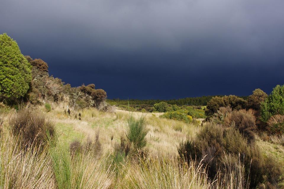 New Zealand, Field, Plants, Heath, Landscape, Nature