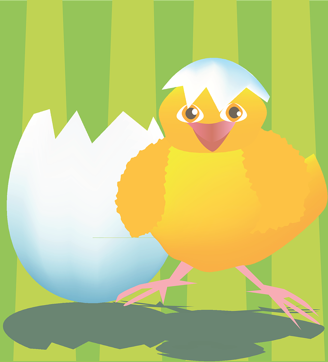 Chicken, Egg, Newborn, Proud, Happy