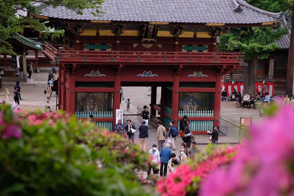 Nezu Shrine, Building, People, Crowd, Garden, Flower