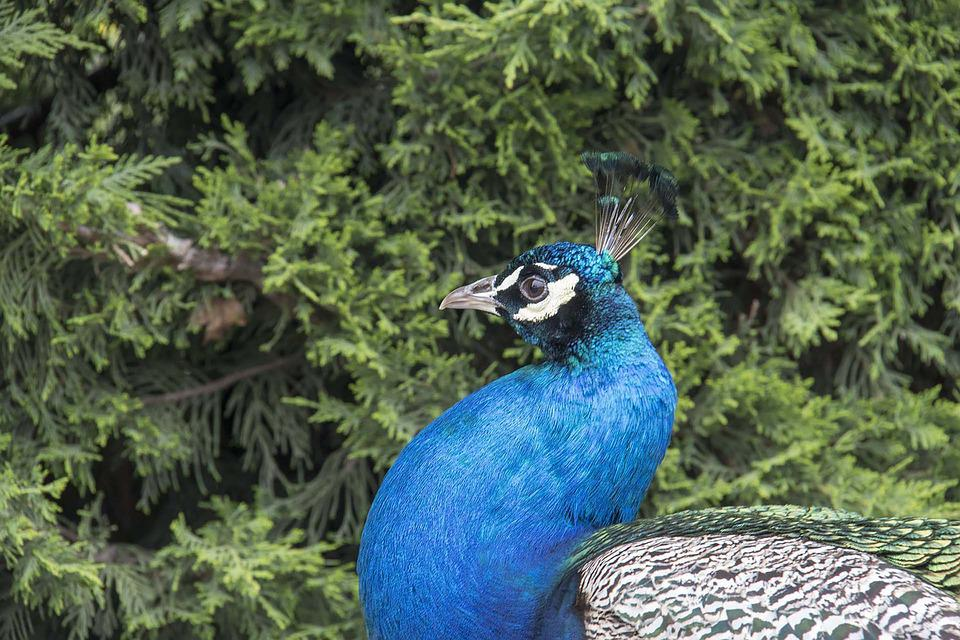 Birds, Nature, Nice, Color, Outdoors, Pen, Park, Turkey