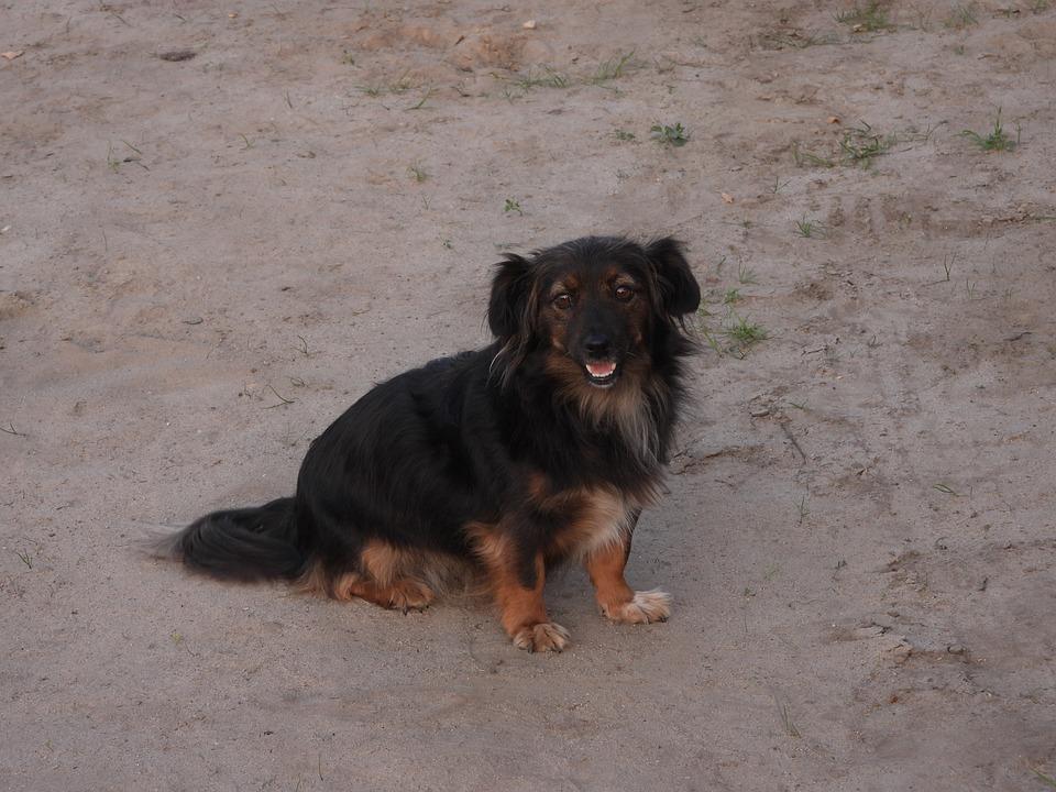 Dog, And The Tramp, Animal, Nice, Doggy, Animals, Coat