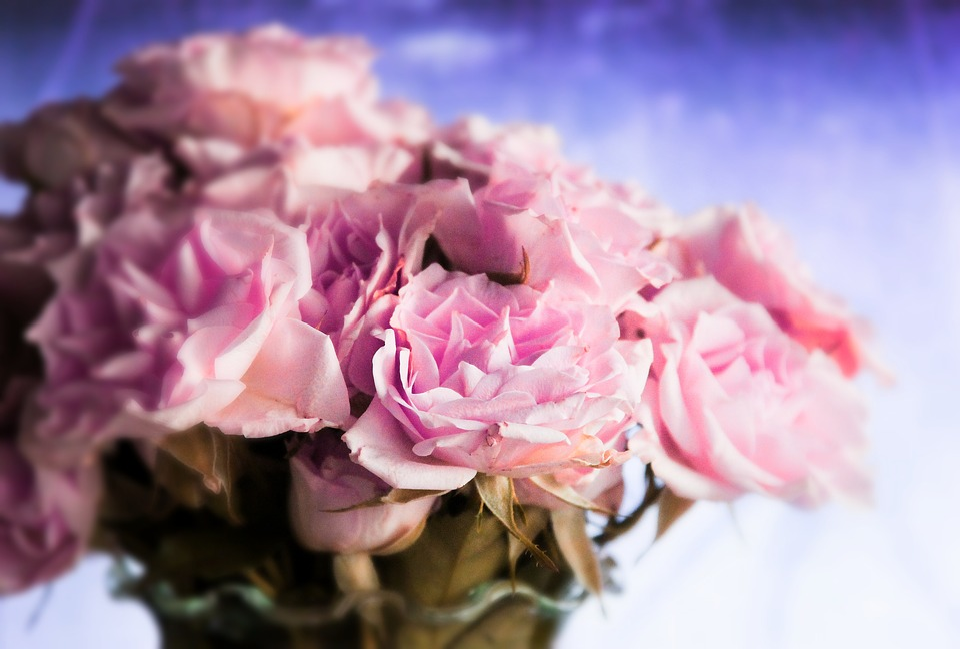 Free photo nice petals fresh rose spring pink flower max pixel rose flower pink fresh spring nice petals mightylinksfo