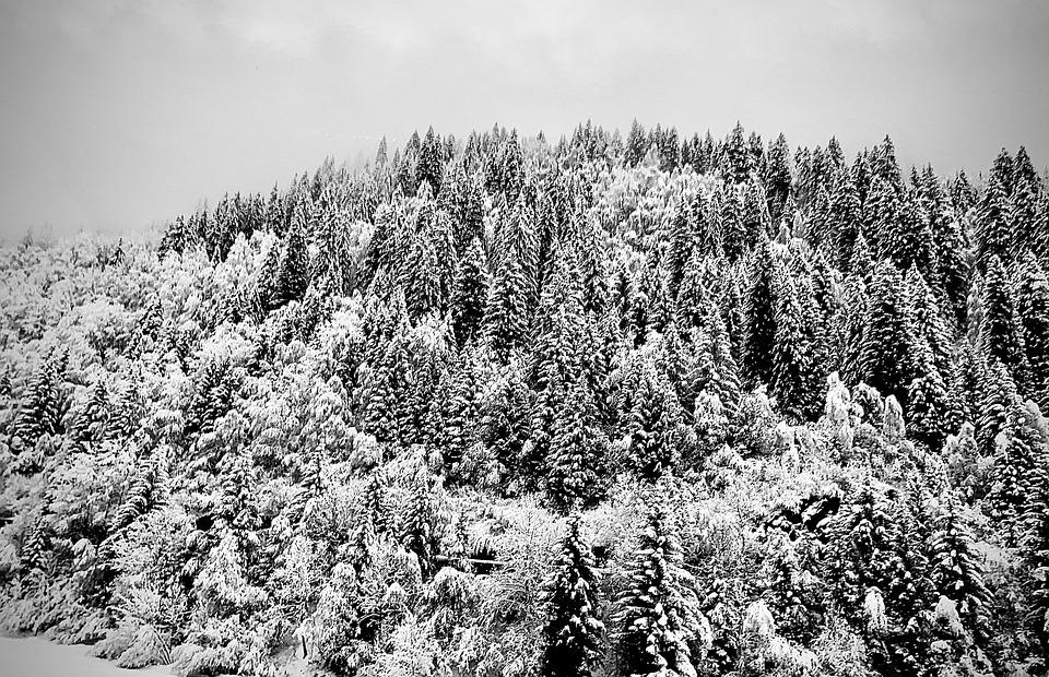 Snow, Nieve, Mountains, Frío, árboles, Invierno, Blanco