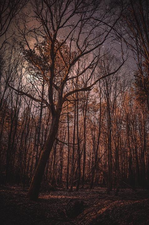 Forest, Night, Nature, Trees, Dark, Month, Fantasy