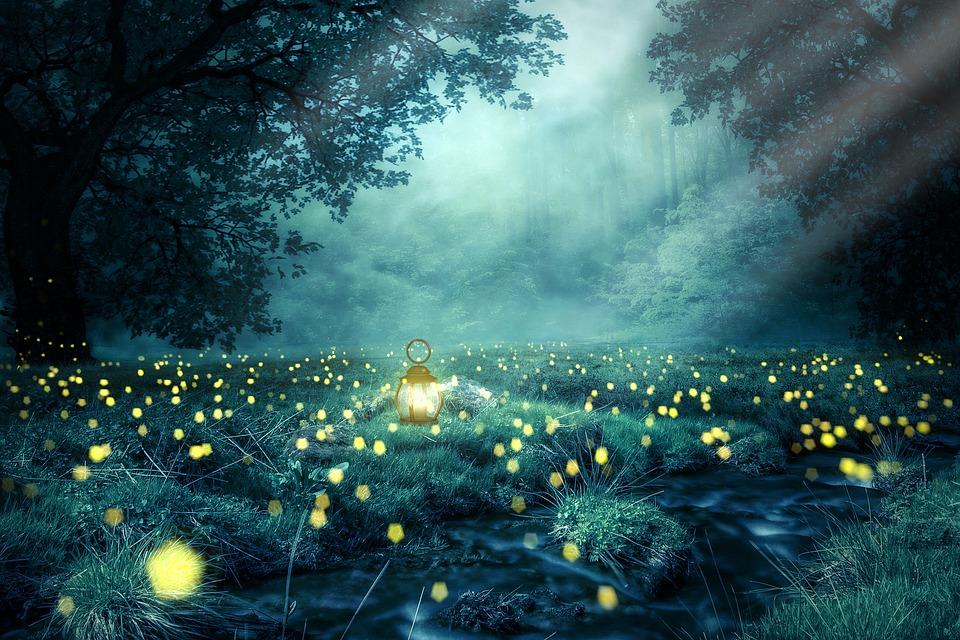 Night, Forest, Glowworm, Light, Lantern, Nature, Tree