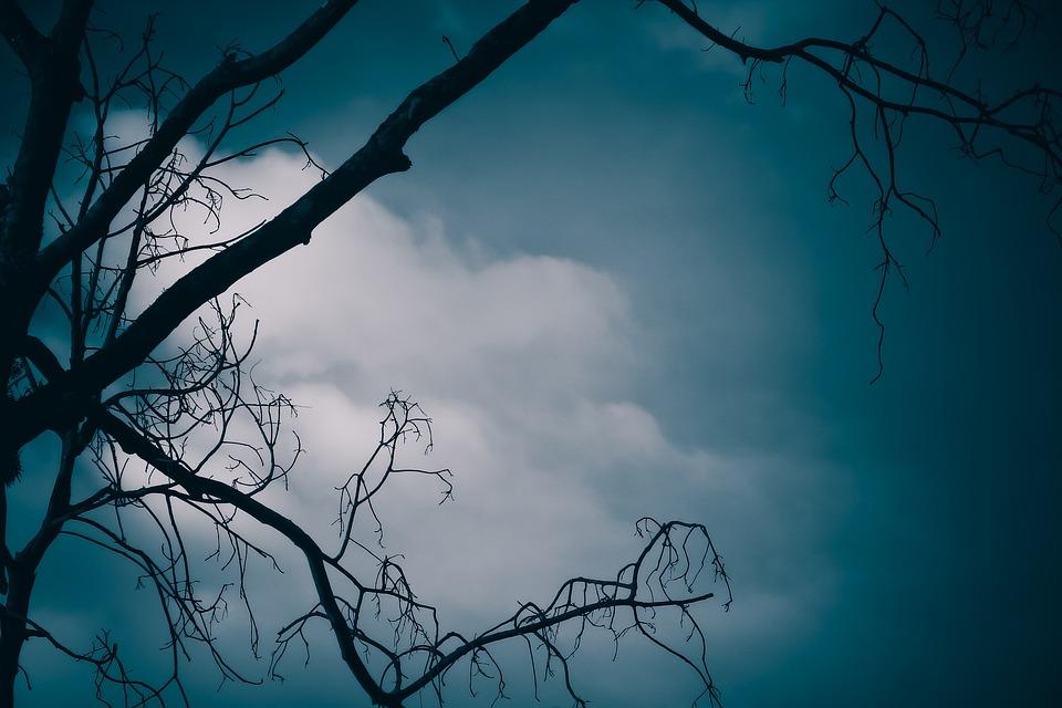 Landscape, Dark, Tree, Forest, Night, Mystery, Fantasy