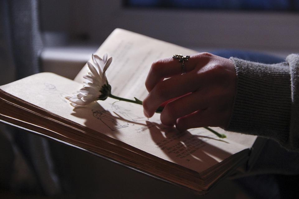 Book, Darkness, Evening, Night, Light, Nature