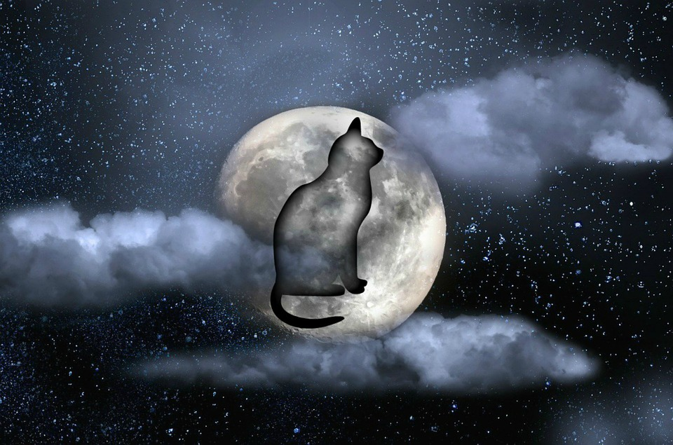 Cat, Moon, Night