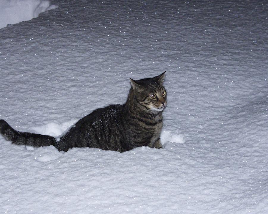 Strolling, Tabbed Cat, Feline, Animal, Pet, Night Shot
