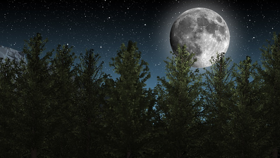 Moon, Night Sky, Stars, Trees, Nature