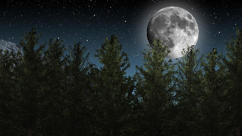 Moon, Night Sky, Stars, Trees, Nature