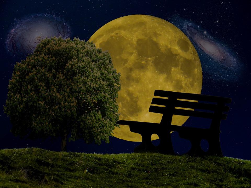 Moon, Star, Universe, Tree, Bank, Night, Night Sky, Sky