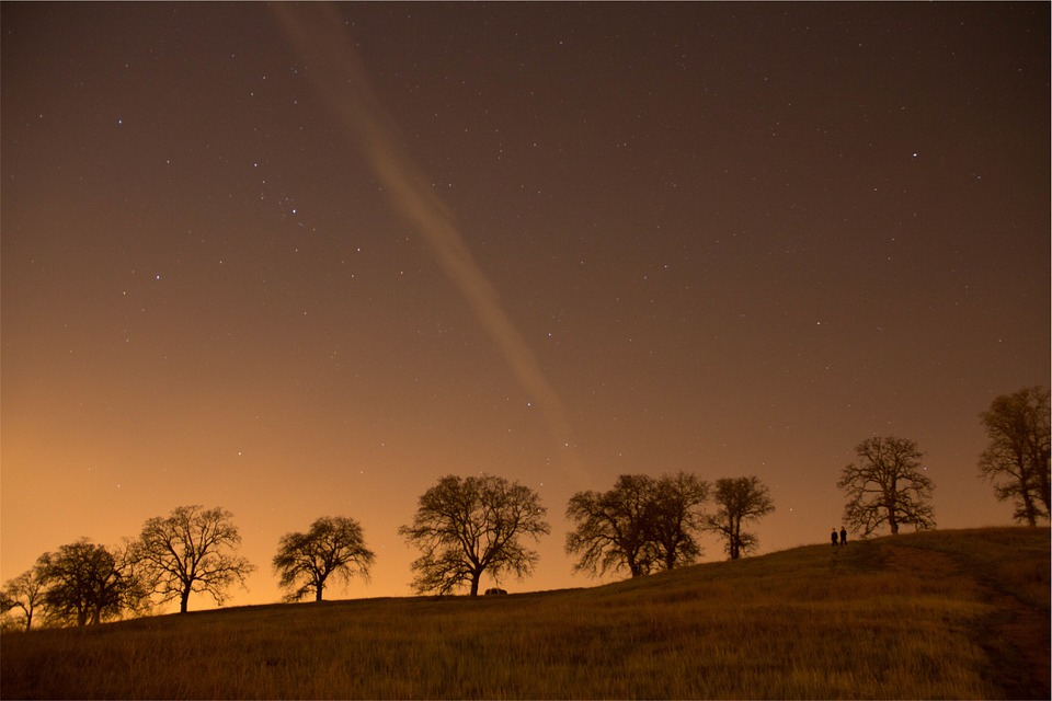Stars, Sky, Night, Trees, Grass, Field