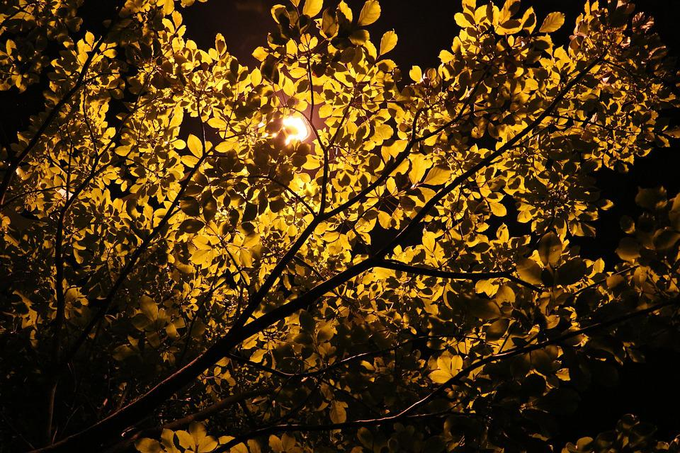 Tree, Night View, Lamp
