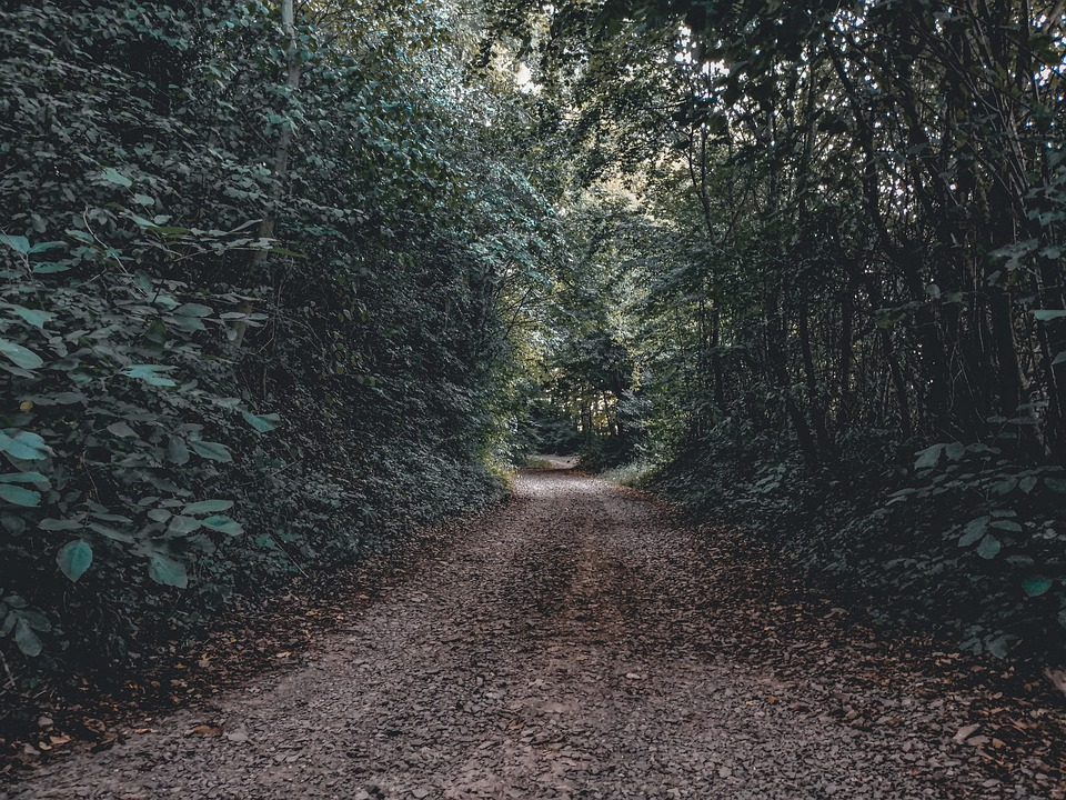 Path, Dark, Night, Horror, Walk, Nightmare, Landscape