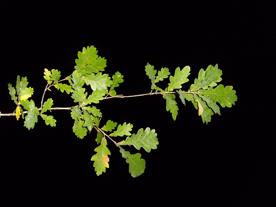 Nightshot, Pak, Branch, Leaves, Leaf, Landscapes