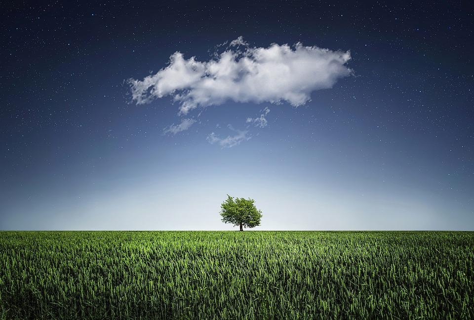 Tree, Natur, Nightsky, Cloud, Meadow, Grass, Landscape