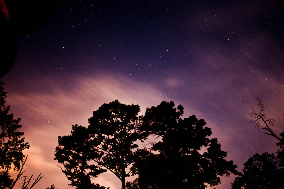 Nightsky, Tree, Silhouette, Stars, Night